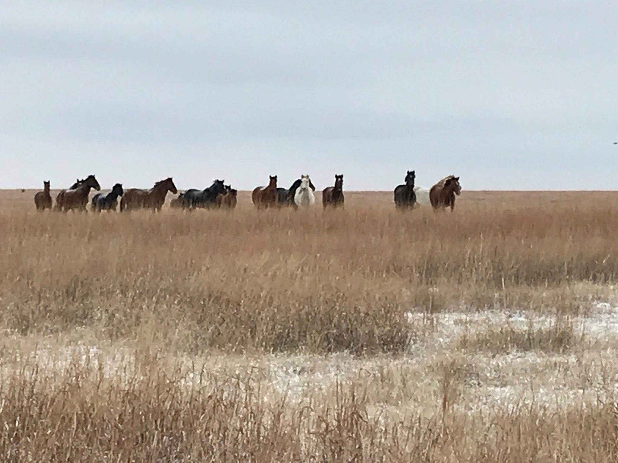 horse ranch inspiration for New home construction Cincinnati